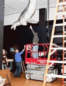 Loài hải cẩu báo (Hydrurga leptonyx) được tìm thấy nhiều tại Nam cực. Nó là một trong những động vật săn mồi bậc cao trong chuỗi thức ăn tại Nam cực. Trong mùa hè, hải cẩu báo săn chim cánh cụt và các loài hải cẩu khác, còn trong mùa đông, thức ăn chủ yếu của nó là cá và các loài nhuyễn thể. Ảnh: AMNH.