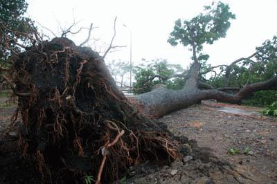 Cận cảnh bão số 1 qua ảnh Images2001044_baoQN1