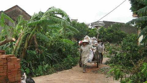 Người dân xóm 7 xã Tráng Việt dọn dẹp sau trận lóc xoáy hôm qua