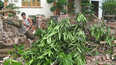 Cây cối, tường rào nhà ông Kể ở xóm 7 bị thổi bay