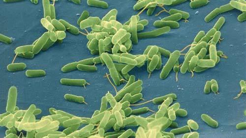 Vi khuẩn ngủ 100 triệu năm dưới Bắc Băng Dương
