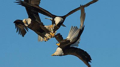 Phục kích cuộc săn mồi của sát thủ trên không
