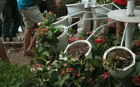 Bị du khách hành hạ nhiều thân hoa úa mầu chờ chết.
