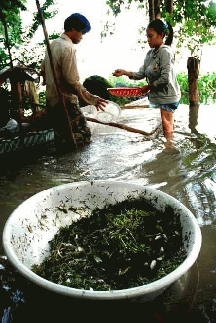 Búng Bình Thiên cá tôm cũng lèo tèo. Năm rồi, nơi này thành lập Chi hội nghề cá nhưng nay chỉ còn vài vài ba người khai thác.