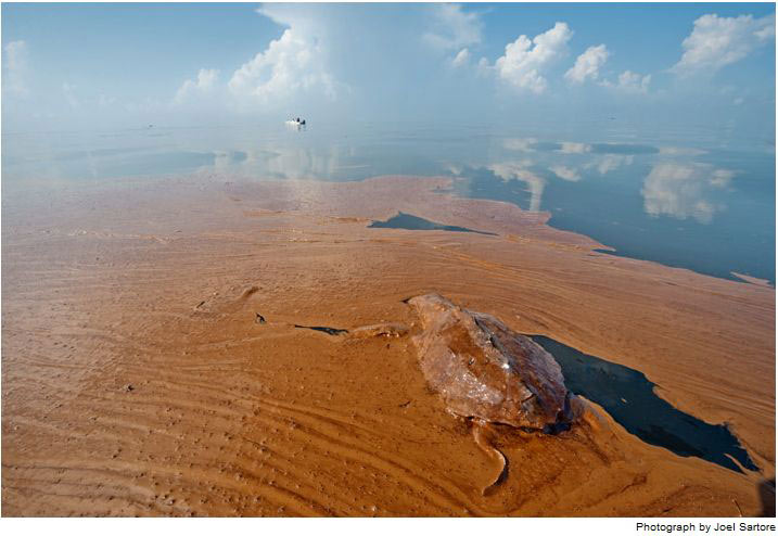 Xác một con rùa biển bị dầu bao bọc nằm bơ vơ giữa vịnh Barataria, La. Hơn 500 cá thể rùa biển đã chết trong khu vực dầu tràn. Tính đến ngày 2/8, người ta đã đưa 134 tổ trứng rùa đến khu vực không bị nhiễm dầu, và có 2.134 cá thể rùa con đã nở từ những tổ trứng này.