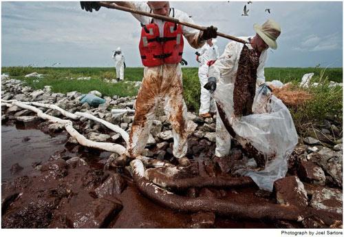 Những công nhân này đang thu gom các túi thấm dầu gần một bãi chim ở vịnh Barataria, La. Tính đến cuối tháng 7, các đội thu gom đã thu được gần 40.000 tấn chất thải rắn.