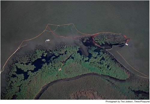 Một khối lượng lớn dầu tràn vào vùng đầm lầy ở bang Louisiana. Công ty BP đã đặt những ống dây màu vàng và cam để gom dầu tràn và các ống dây màu trắng để thấm dầu.