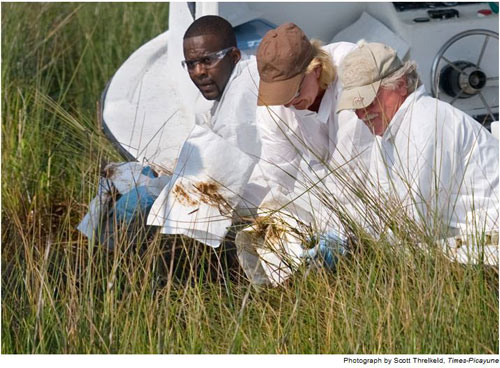 """Những công nhân này đang dùng các mảnh vải trắng để lau dầu trên các cọng cỏ trong khu đầm lầy ở giáo xứ tammany, La. Việc dùng giẻ để lau khoảng 7 triệu cọng cỏ có thể rất """"dở hơi"""", nhưng nó giúp cung cấp dữ liệu để đánh giá mức độ nhiễm dầu của khu vực này và cung cấp các mẫu dầu để thực hiện các xét nghiệm khác."""