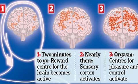 Điều gì xảy ra trong não khi nàng 'lên đỉnh'?