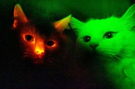 Kỳ thú: Chó, mèo phát sáng
